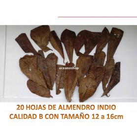 20 Hojas de almendro indio CALIDAD B