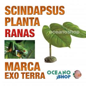 planta-pequeña-scindapsus-smart-plant-para-ranas-arbícolas-exo-terra