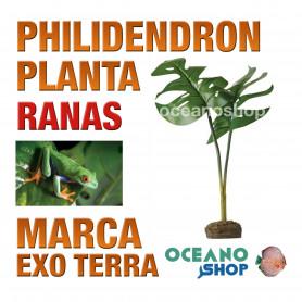 planta-philidendron-smart-plant-para-ranas-arbícolas-exo-terra