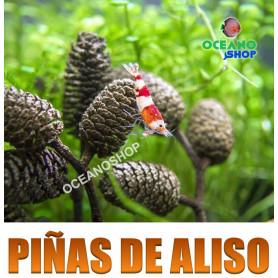 piñas de aliso alder cone gambario gambas hojas almendro indio terminalia cattapa