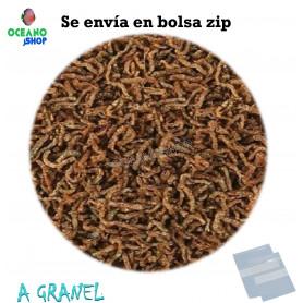Larva roja de mosquito fd liolificada
