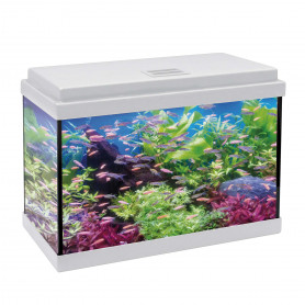 Kit aqualed 50 con filtro interior (33 l) blanco
