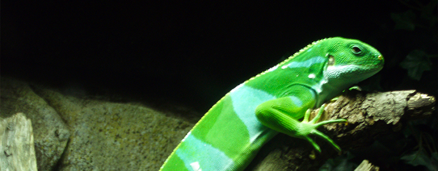 Productos para reptiles