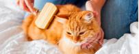 Higiene para gatos
