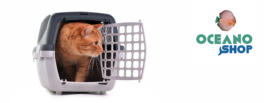 Transporte para gatos