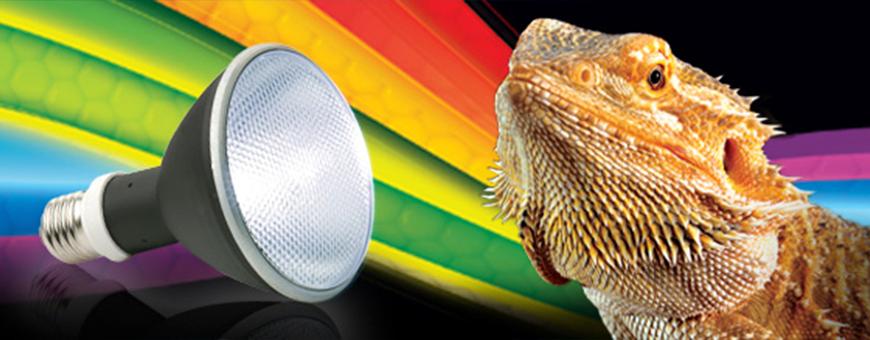 Iluminación para reptiles