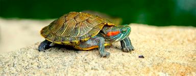 Productos para tortugas