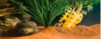 Sustratos para reptiles