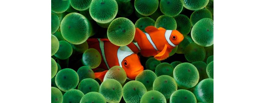 Peces marinos