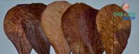 hojas y semillas
