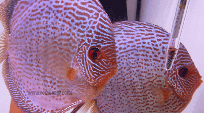 Fish & Aquariums Pet Supplies Comederos Automatico Digital Para Acuario Comedero Automatico De Peces Acuarios High Quality Goods