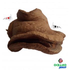 Vaina cabeza de rana de la selva sudamericana