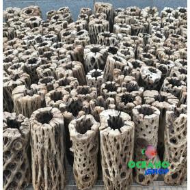 tronco cholla madera acuario gambario gambas