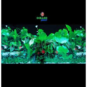 Fondo decorativo 80x40cm d723 acuario pecera