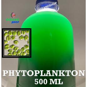 Phytoplankton Tetraselmis fitoplancton