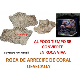 10kg Roca arrecife de coral, se transforma al tiempo en roca viva