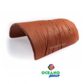 Teja cueva barro loricaridos N-26256