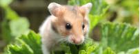 Productos para roedores
