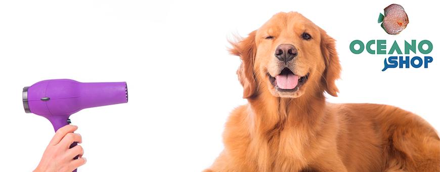 Peluquería para perros