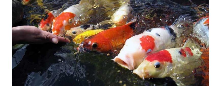 Alimentación para estanques
