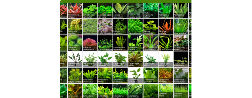 Plantas acuáticas por lotes.