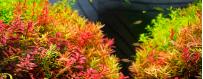 Plantas naturales y artificiales